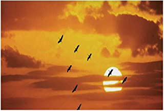 Best shining sun one piece Reviews