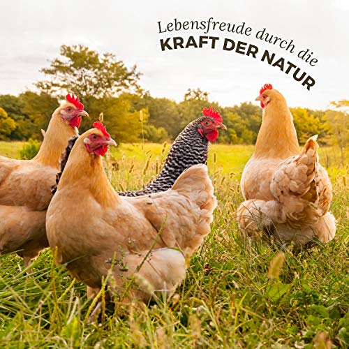 AniForte WermiX Pulver für Hühner, Gänse, Enten und Großvögel 20g - Naturprodukt vor, während und nach Wurmbefall mit Saponine, Bitterstoffe, Gerbstoffe, Wermut, Naturkräuter harmonisieren Magen & Darm - 6