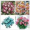 100pcs / bag semi Alstroemeria peruviano Lily Alstroemeria Inca Bandit - Principessa giglio bonsai semi di fiori planta per giardino di casa 6 #1