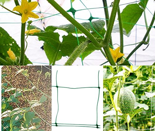 Rank Red Rank ayuda Planta Jardín Red Apoyo 2 x 3 m: Amazon.es: Jardín
