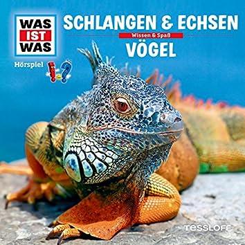 48: Schlangen & Echsen / Vögel