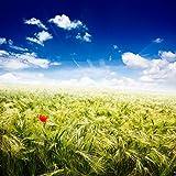 Juego De Rompecabezas De 1500 Piezas Campo De Arroz Verde Con Nubes Blancas Puzzles Interesantes 87x57cm (34.3x22.4in)