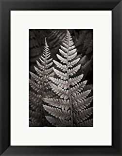 Best lady fern pictures Reviews