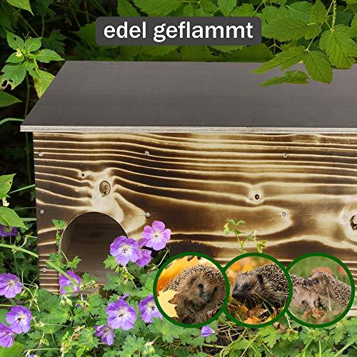 Kees Holzprodukte Igelfutterstation Erfahrungen & Preisvergleich
