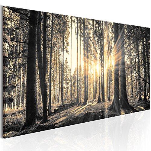 murando - Bilder Wald 135x45 cm Vlies Leinwandbild 1 TLG Kunstdruck modern Wandbilder XXL Wanddekoration Design Wand Bild - Waldlandschaft Natur Panorama Baum c-B-0077-b-c