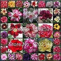 25 semillas - Semillas multicolor fresco Adenium obesum - Semillas de plantas de flor rosa del desierto Bonsai *