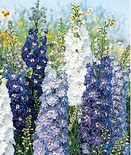 Beautytalk-Garten Rittersporn
