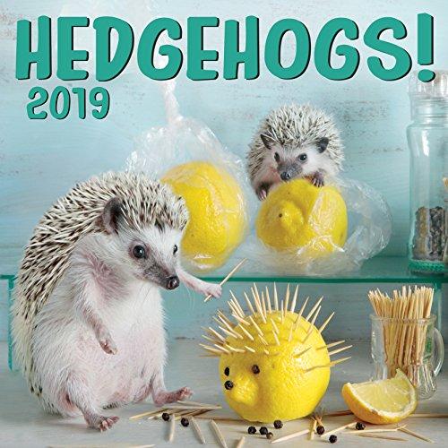 Hedgehogs 2019 Wall Calendar