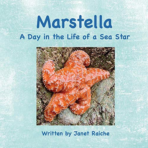 Marstella: A Day in the Life of a Sea Star