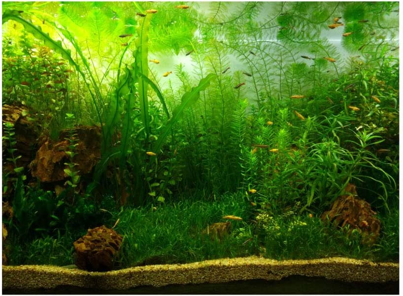 Sale item Sheens Water Grass Style Aquarium Fish Poster Tank Sale special price Thicken PVC A