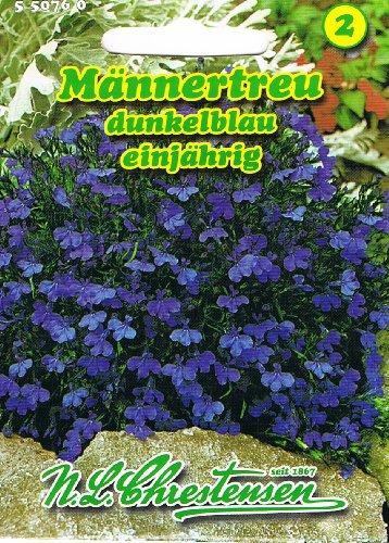 Männertreu , dunkelblau, einjährig, beliebte, reichblühende Beet- und Gruppenpflanze 'Lobelia erinus'
