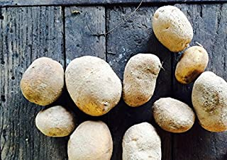 Simply Seed - 5 LB - German Butterball Potato Seed - Non GMO - Organic Grown - Order Now for Fall Planting