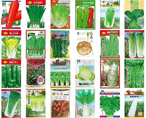 Tianjin Napa Kohl 500 Samen: China Gemüsesamen Frühling Herbst Garten Hof Balkon Topf ?? ?? ?? ? ?? ? ?? ?? ??