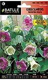 Semillas de Flores - Cobea Scandens trepadora...