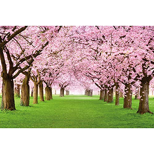 GREAT ART Poster – Cherry Blossom Trees – Picture Decoration Japan Spring Forest Alley Park Nature Landscape Avenue Sakura Bloom Flowers Image Photo Decor Wall Mural (55x39.4in - 140x100cm)