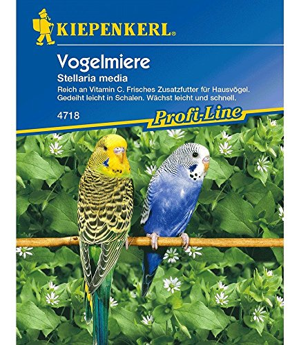 Vogelmiere,1 Portion