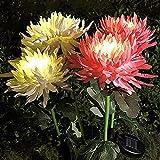 Luces solares al aire libre, paquete de 2 luces impermeables de crisantemo, flores de estaca, adornos de jardín al aire libre, luces solares de jardín para decoración de patio (blanco)