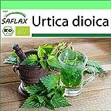 SAFLAX - Garden to Go - Ecológico - Ortiga - 2000 semillas - Con macetero de barro, platillo, sustrato para cultivo y fertilizante - Urtica dioica