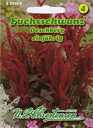 Fuchsschwanz 'Oeschberg' stehend , einjährig, dunkelrot, standfest 'Amaranthus paniculatus '