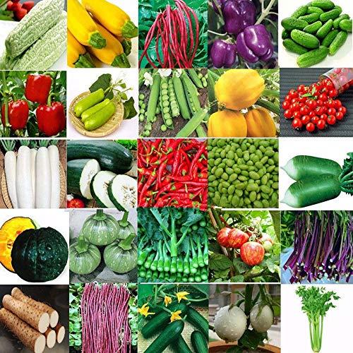 Portal Cool Laitue 100 graines: Heirloom Jardin Non Potagères Semences Ogm/Banque Hydrure des Plantes Beaucoup Survie Bio ~