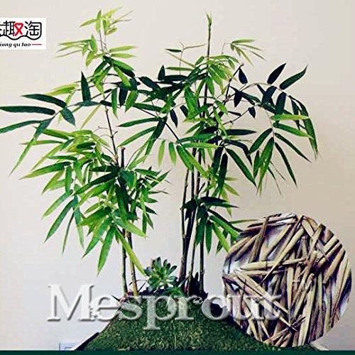 50 pcs / sac rares Graines Mini bambou, jardin décoratif, Graines Herb Planteur Bambu arbre pour Diy jardin Envoyer cadeau