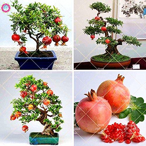 50 pcs Jardin Mini Bonsai grenade Graines très doux fruit délicieux Graines Succulentes Graines Arbre vivace Plante en pot