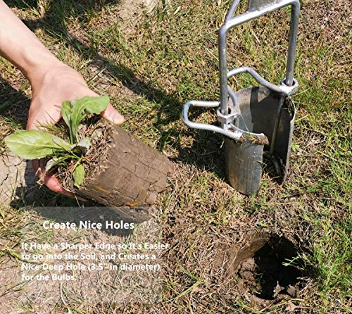 CHUMAA Bulb Planter, Weeder, Sod Plugger, Flower Planting, Soil Sampler-5-IN-1 Lawn Tool and Garden Tool - Enhanced… 9 SIMPLE AND EASY TO USE –To use, drive the Long-Handled Bulb Planter into the soil and turn clock-wise and counter-clockwise a few times to loosen up the dirt, then pull up. Dig 3.5inch diameter planting holes quickly, one after another, from a comfortable standing position. Avoid digging in dry or overly saturated soil. MULTI-USE GARDEN TOOL –Plant your garden favorites. Spring and fall bulbs, annuals, ground covers, vegetables and more. Makes a great lawn and sod plugger, weeding tool, soil sample tool and drip-edge fertilizing tool. TAKE THE PAIN OUT OF PLANTING –5-IN-1 Planting Tool allows you to work from a standing position, saving your back and knees. Comfortable, sturdy hand grips are helpful for seniors or those with mild arthritis.
