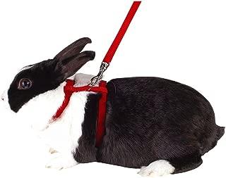 Arnés para conejos, diversos colores Longitud: 140 cm: Amazon.es ...