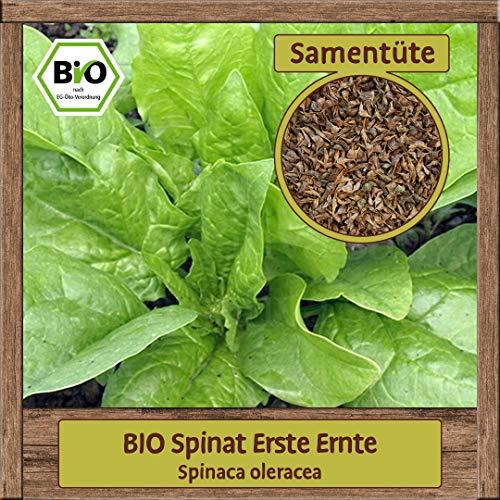 Samenliebe BIO Gemüse Samen Spinat Erste Ernte (Spinaca oleracea) | BIO Spinatsamen Gemüsesamen | BIO Saatgut für 2m²