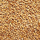Supravit Weizen Futterweizen 5 kg – Einzelfuttermittel für Tauben, Vögel, Nager & Geflügel