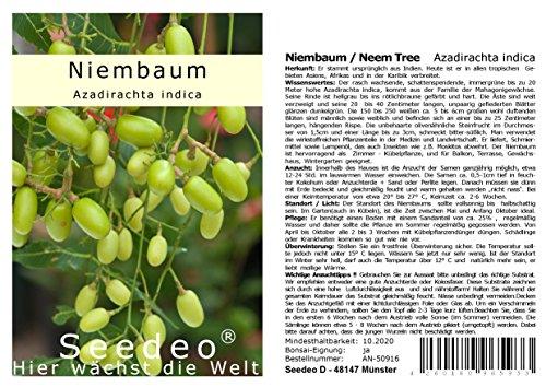 Seedeo® Niembaum/Neem Tree (Azadirachta indica) 10 Samen