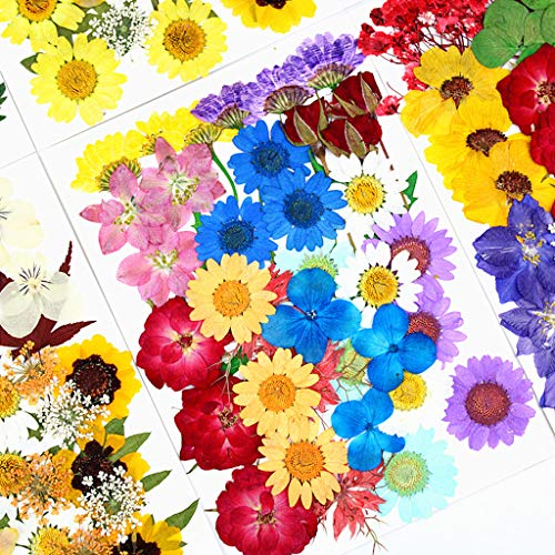 YU-NIYUT Dried Flowers UV Resin Decorative Natural Flower Stickers 3D Dry Beauty Decal for DIY Craft Resin Jewelry Making Art Craft