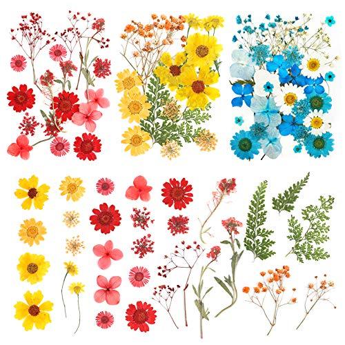 Flores Secas Manualidades Resina flores secas  Marca Richaa