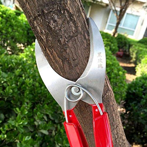professionnel Jardin Fruit Arbre Bague Cutter d'élagage Ciseaux Cisailles à bague Bague couteau écorce Stripper branches outils de coupe