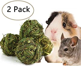 growing grass for guinea pigs