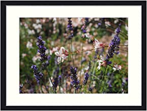OiArt Wall Art Canvas Prints Wood Framed Paintings Artworks Pictures(20x14 inch) - Flowers Plant Blue Lavender White Glory...