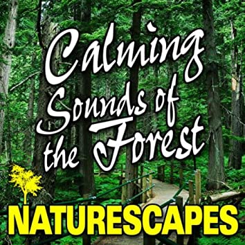 Calming Sounds of the Forest (Nature Sounds)