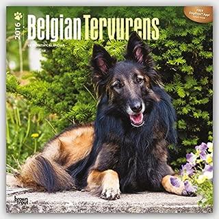 Belgian Tervurens - 2016 Calendar 12 x 12in