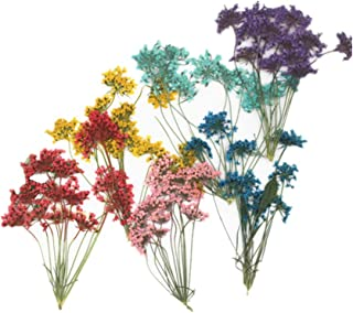 6pcs Natural Real Pressed Dried Flower for DIY Craft Jewelry Making Handmade Resin Ornament 60 Branches (Multi)