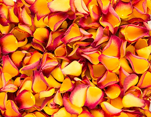 Petals and Roses Confettis de pétale de Rose biodégradable pour Mariages (Coucher De Soleil Kiss, 2 litres)