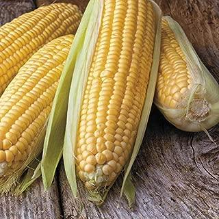 Honey Select Triplesweet Hybrid Corn Seeds - remarkable crunchy-sweet kernels !!(100 - Seeds)
