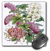 3drose LLC 8x 8x 0.25インチマウスパッド、ビクトリア朝ピンクグリーンとホワイト花(MP 39674_ 1)