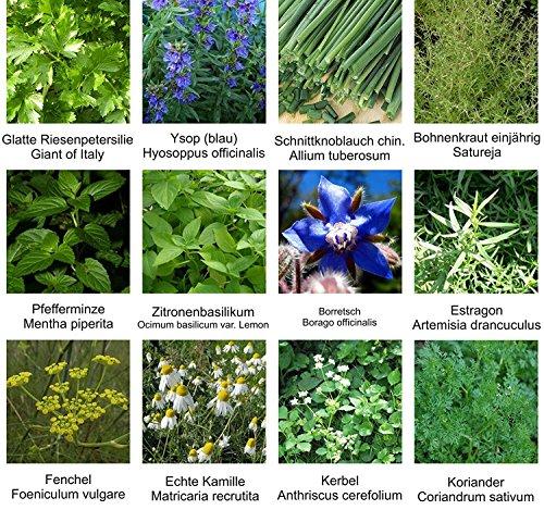RWS Graine - sélection des semences - Set - Mix - Mix - Kräutergarten 2-12 variétés - environ 900 graines