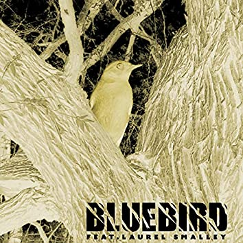 Blue Bird (feat. Laurel Smalley)
