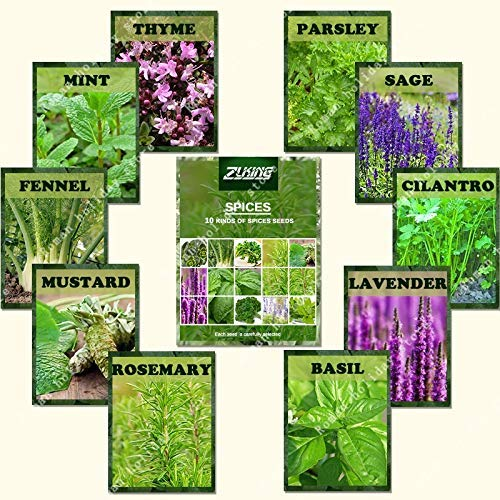1100 Pcs Mix Spices Seeds Collection Popular Organic Nature Bring The Fragrance Plant for Kitchen Home Garden Planting,Basil,Lavender,Sage,Mint^