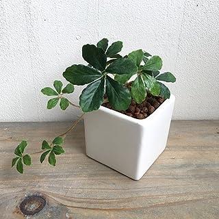 シュガーバイン DB ミニプラント 造花 観葉植物 フェイクグリーン ミニ 消臭 光触媒 CT触媒 人工 リアル おしゃれ 室内 ギフト