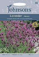PM 英国ジョンソンシード Plantmans's Garden Lavander French Lavender  プランツマンズ・ガーデンズ・ラベンダー・フレンチ・ラベンダー