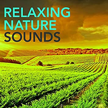 Relaxing Nature Sounds -  Waterfall Constant Roar of a Mountain Waterfall to Reduce Stress & Rest, Nature Sounds Relaxing Minds for Relaxation Time