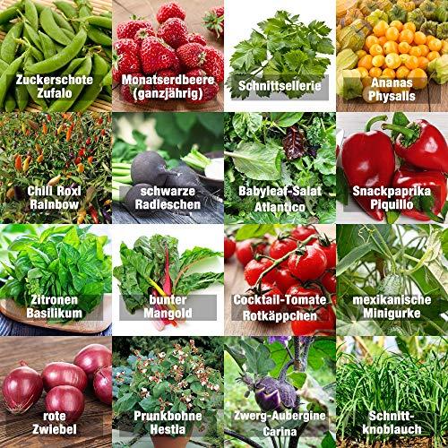Samen Gemüse Set