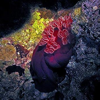 Sea Slugs Vol. 3